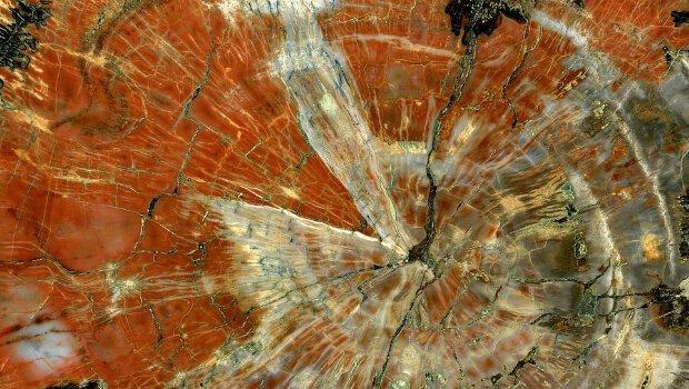 Natürliche Verkieselung von Holz, Mineralisierung und Verdichtung von organischem Material. Quelle: Wikipedia, Verwendung nach CC BY 3.0 Lizenz